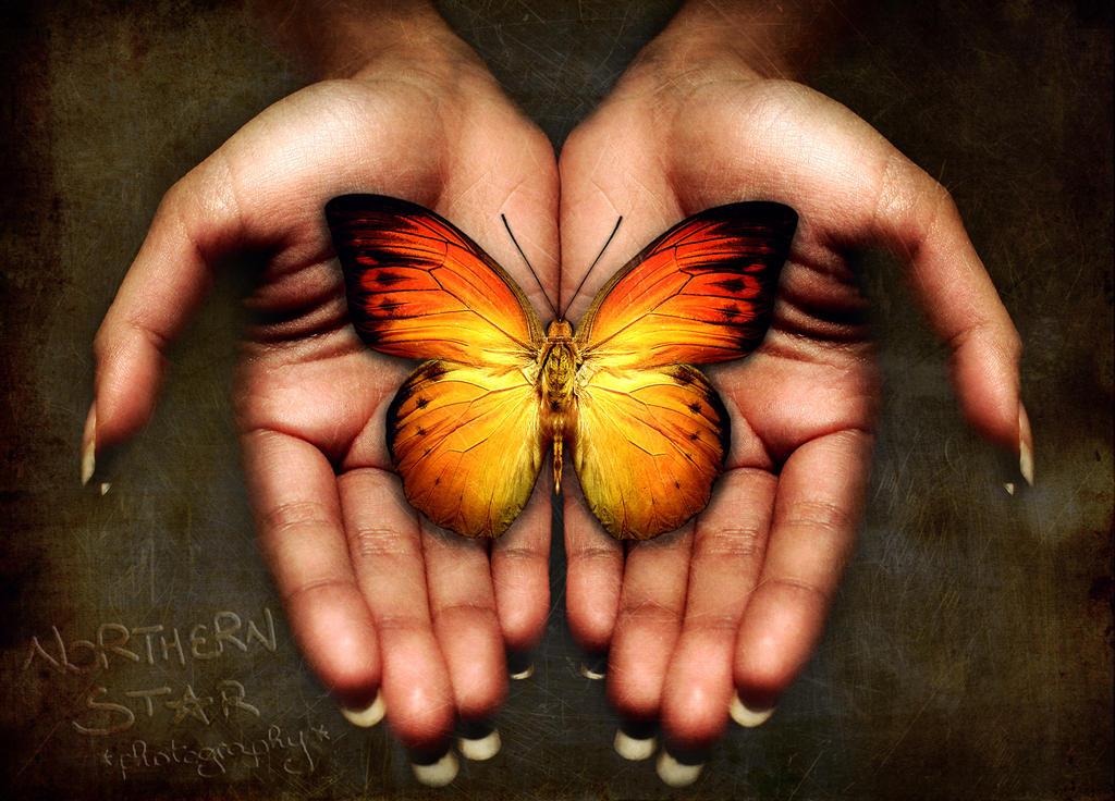 the butterfly effect by purplerainistaken