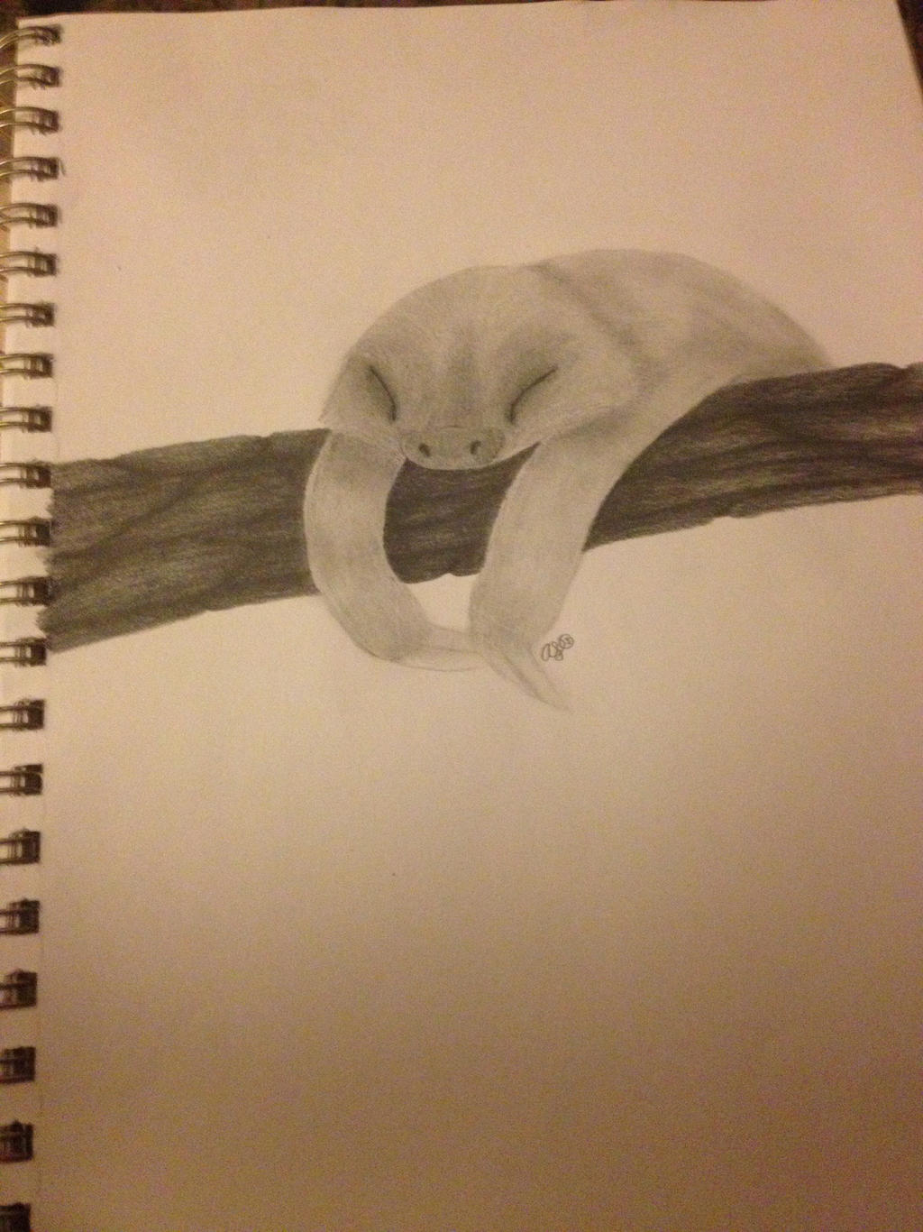 baby sloth pencil drawing by xiaodarkcloud on deviantart
