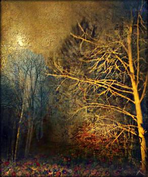 A Moonlight Illusion