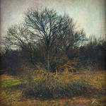 Abandoned feelings. by agevla77