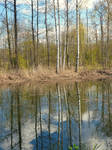 May reflections  by agevla77