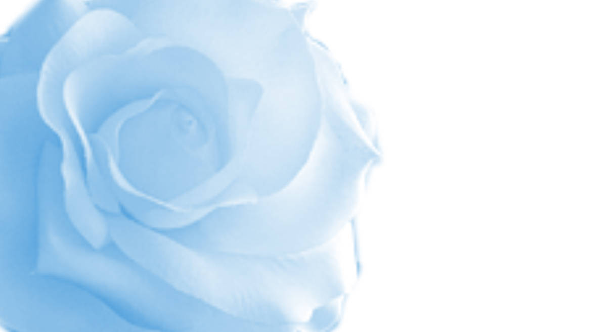 blue roses backgrounds
