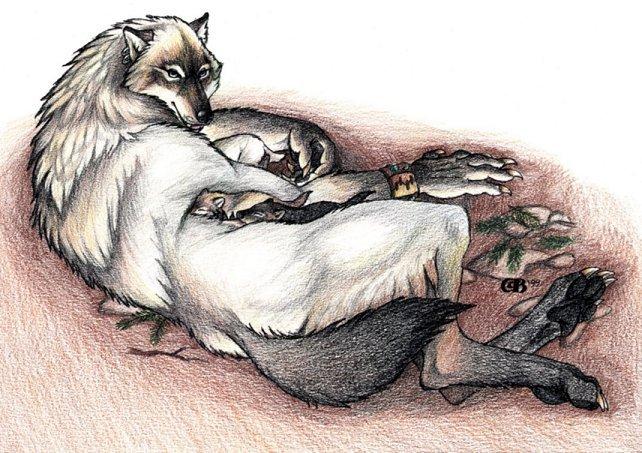 Goldenwolf Werewolf