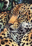 Lounge Leopard ACEO