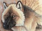 Woods Wolf Miniature
