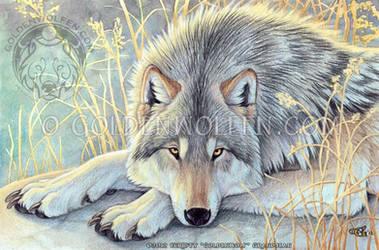 Contemplation by Goldenwolf