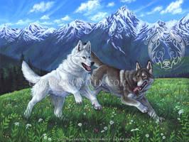 Wildflower Run by Goldenwolf