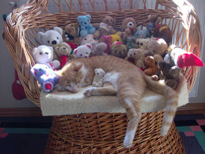 My cat and the teddy bears