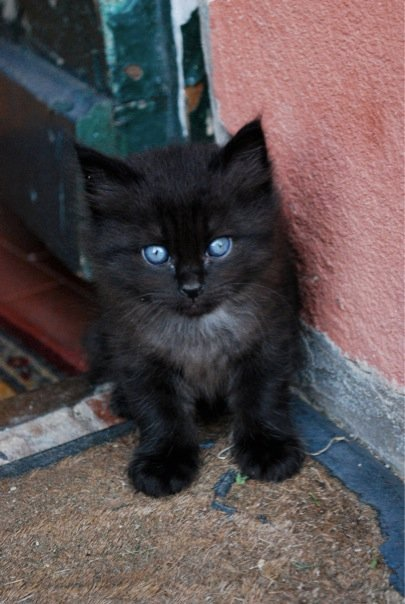 Black Kitten 1 By Martap84 On Deviantart