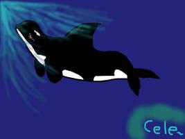 Orca by raja1057