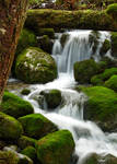 Cascading Life by tuftedpuffin