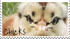 Baby Chick Stamp by muddyputty