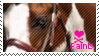 paint horse stamp by muddyputty