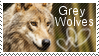 grey wolf stamp by muddyputty