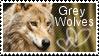 grey wolf stamp by muddyputty
