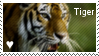 tiger stamp by muddyputty