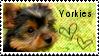 Yorkie stamp by muddyputty