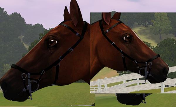 Exotropia voltaire equestrian.