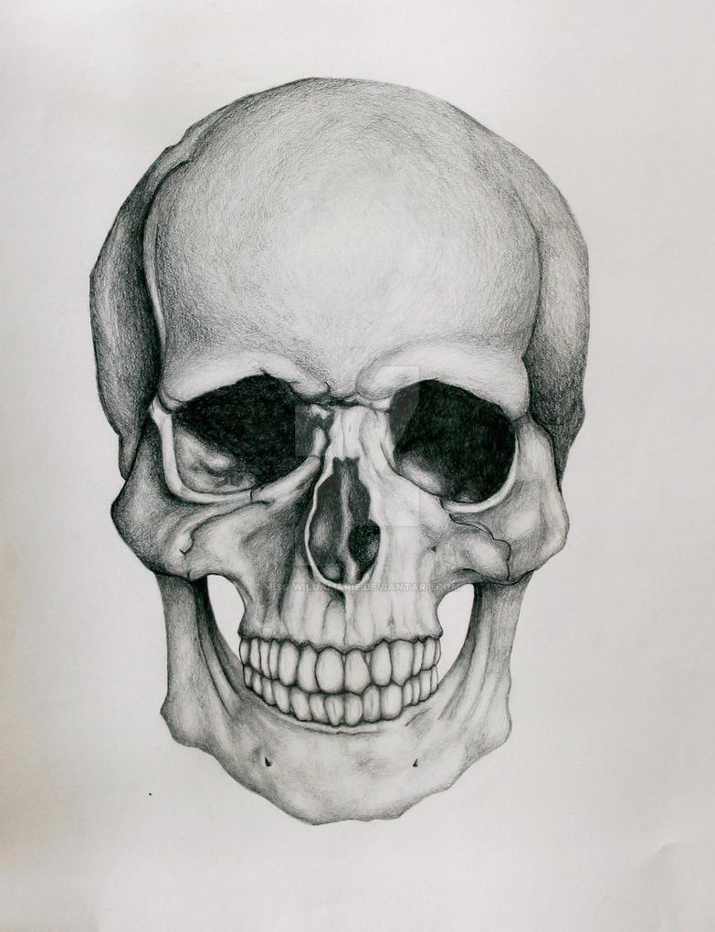 Skull Drawing by miss-wildamarie on DeviantArt
