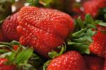 Strawberry Stock 1