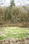 Swamp Background 3