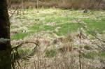 Swamp Background 4