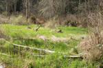 Swamp Background 6