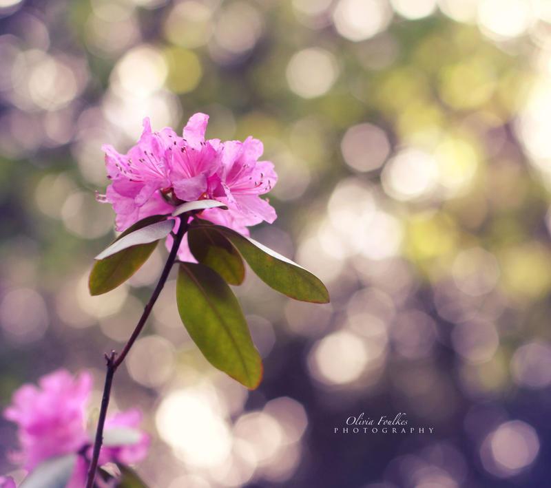 Memories of May by ArtByOlivia