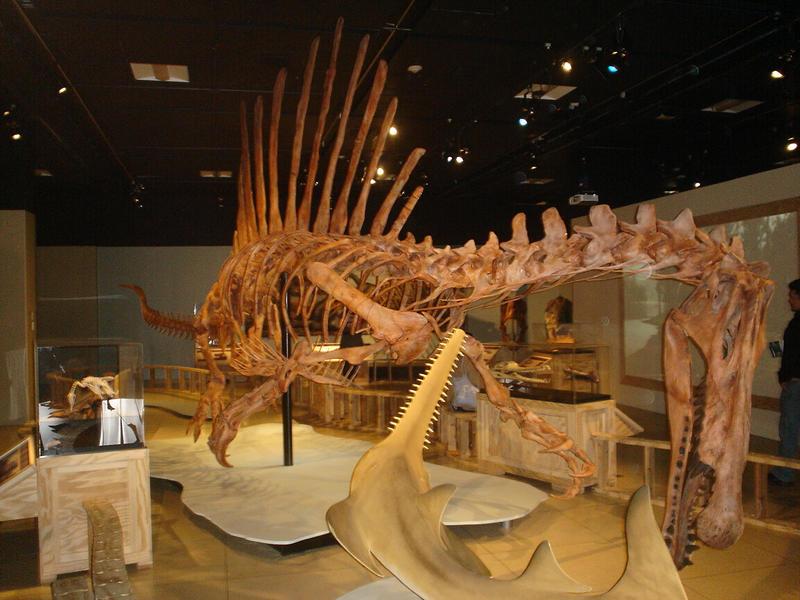 Spinosaurus by Archanubis
