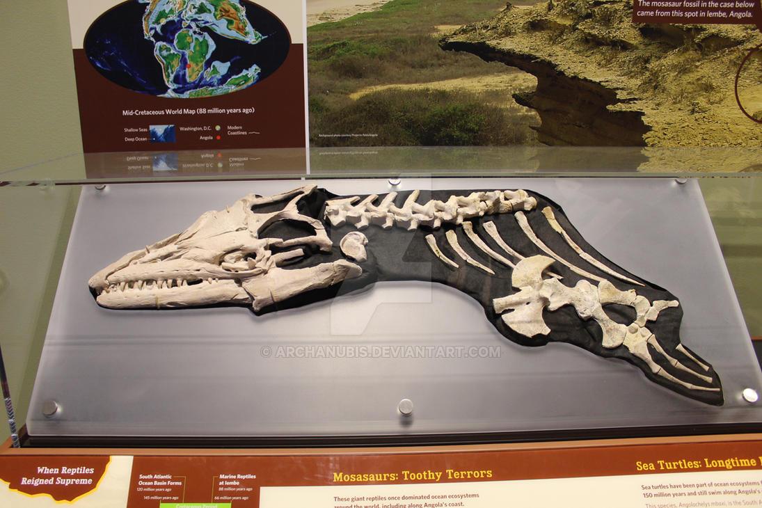 Angolasaurus by Archanubis