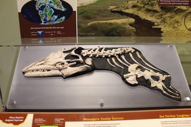 Angolasaurus