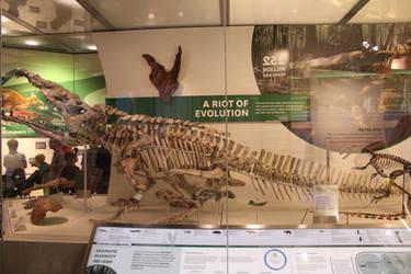 Smilosuchus