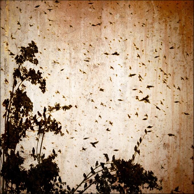 birds by nasht-01