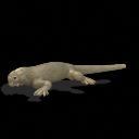All Todays Iguana