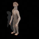 Caribbean Dwarf Dylanus