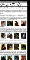 Above The Bit: Horse Markings part: 1 by Decorum100