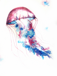 Spring jellyfish