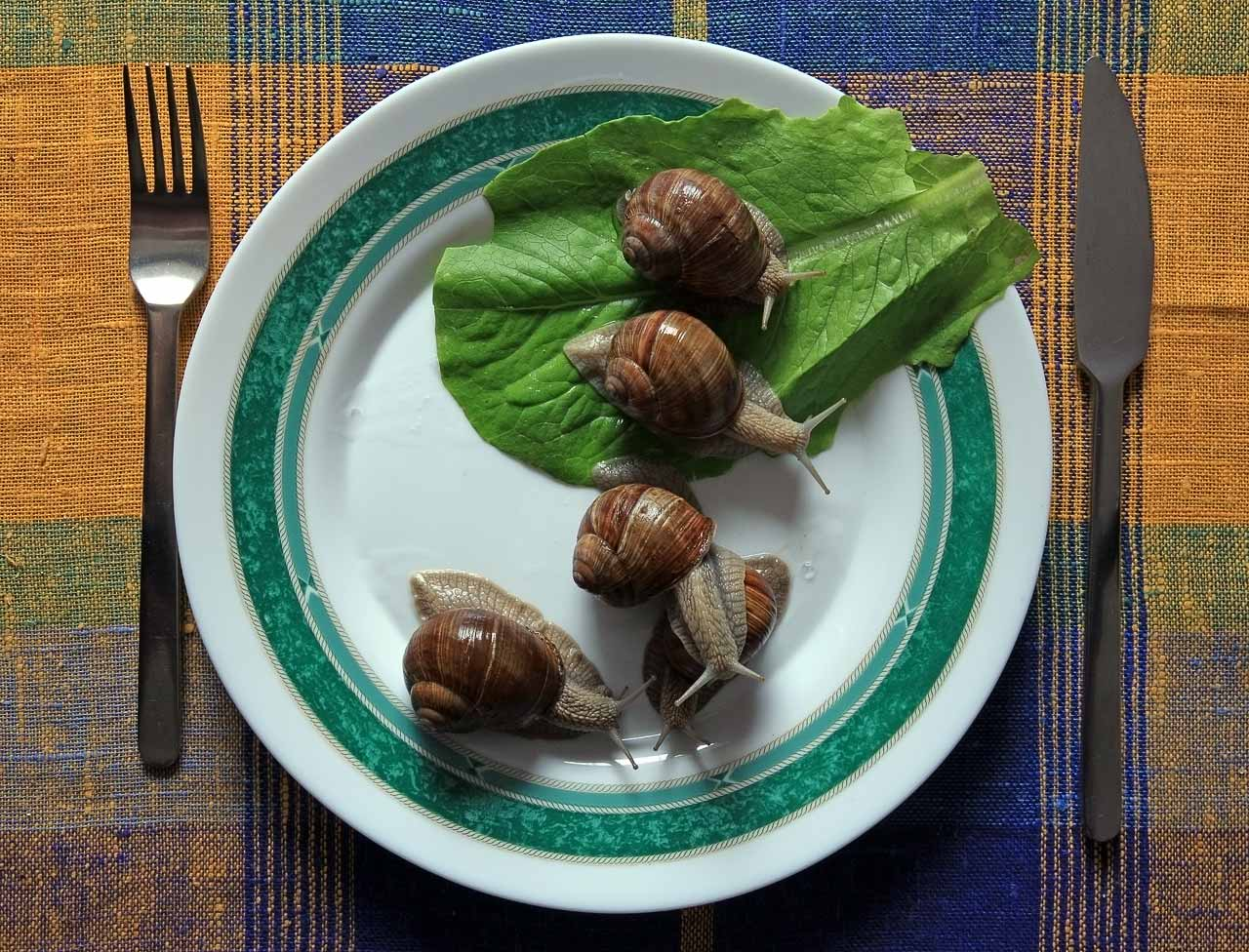 Escargot by Gutalin