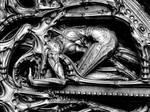 Metamorphosis by Gutalin