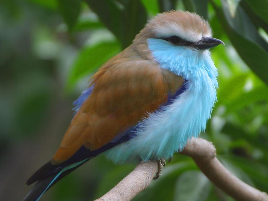 a cool bird by DownloadLink