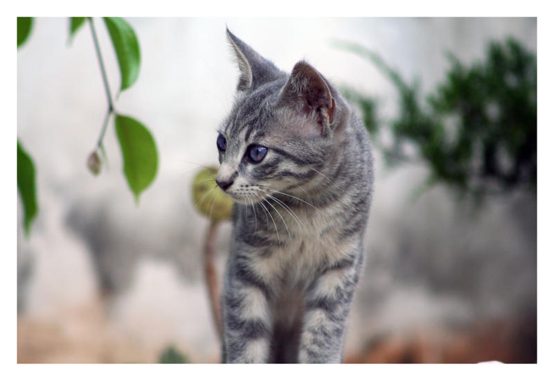 Cute Grey Cat V.III by McSes on DeviantArt: mcses.deviantart.com/art/Cute-Grey-Cat-V-III-59671186