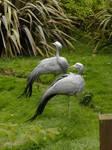Delicate Cranes.