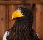 Captain Beaky...
