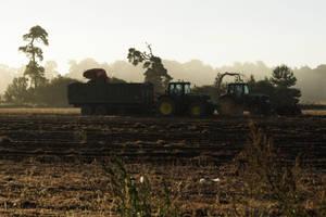 Misty Harvest.