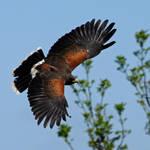 On Broad Wings..