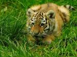 Crouching Tiger..