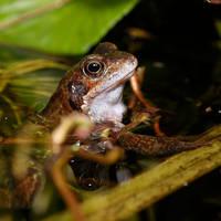 Proud Frog 3..
