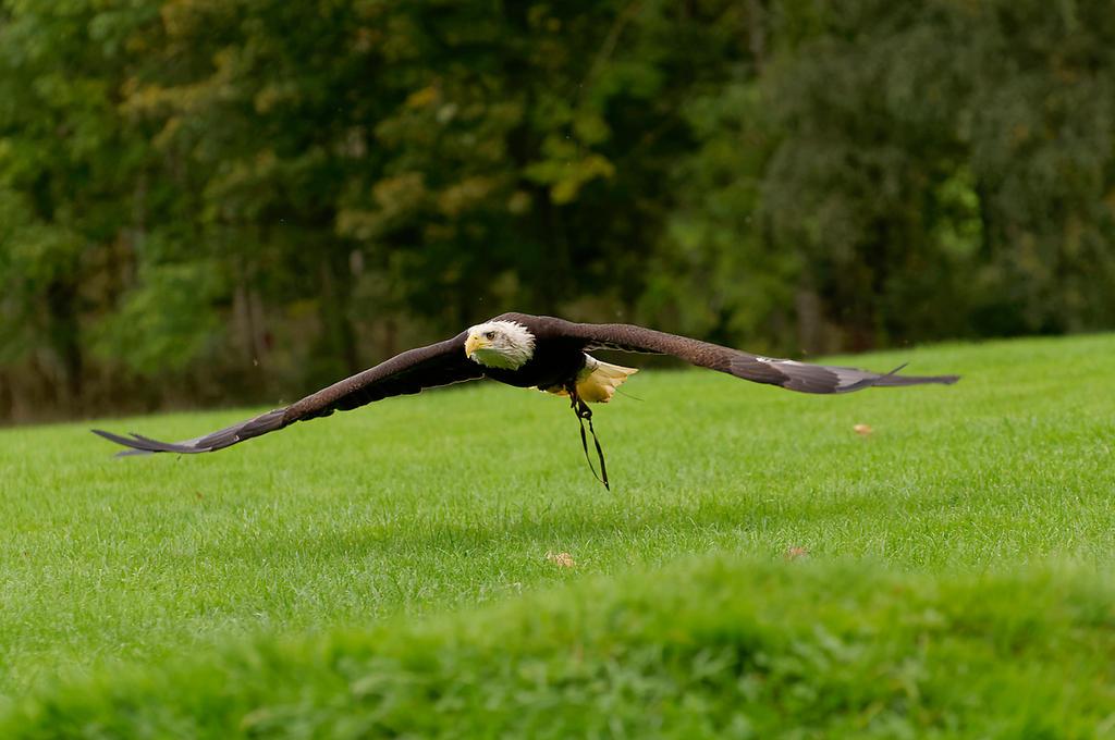 Skimming. by quaddie