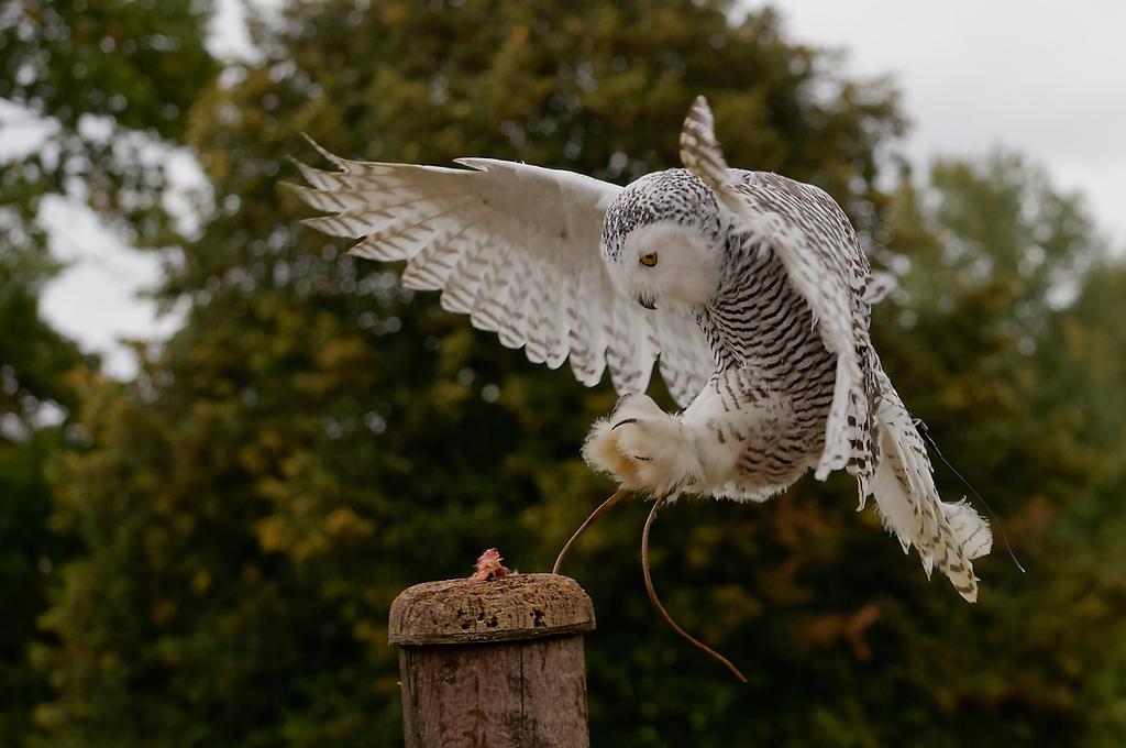 Precision Landing. by quaddie
