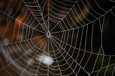Spider Web by apparate
